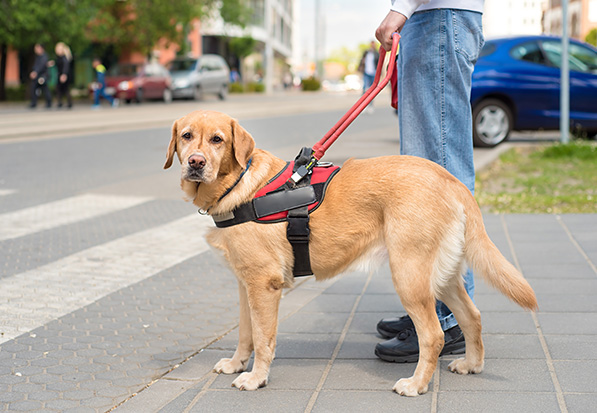 3 Things to Know About Accommodating Emotional Support Animals
